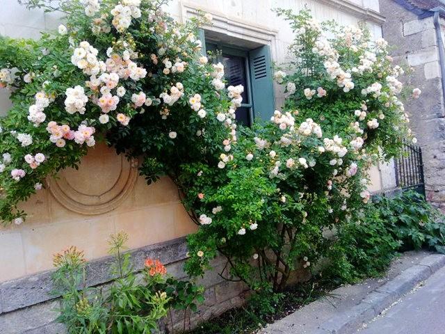 谢迪尼--法国玫瑰村_图1-18
