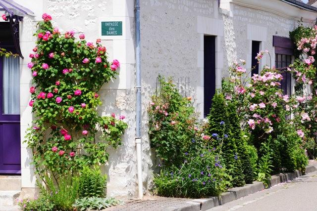 谢迪尼--法国玫瑰村_图1-20