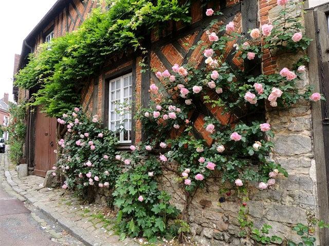 谢迪尼--法国玫瑰村_图1-22