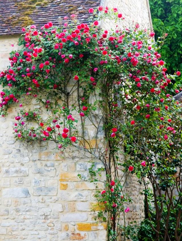 谢迪尼--法国玫瑰村_图1-31