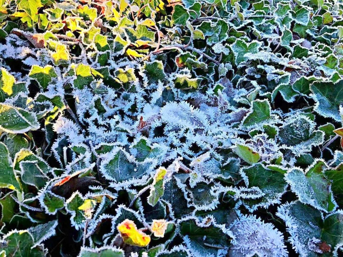 寒流袭扰西雅图(图)_图1-2