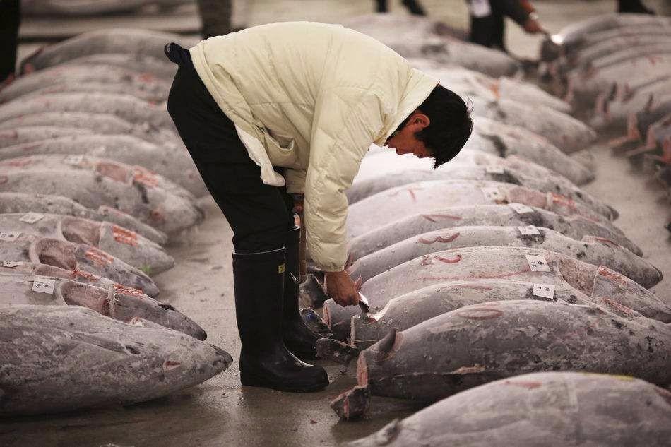 天下第一贵的鱼,比大熊猫还濒危,因太好吃人类不愿禁捕_图1-2