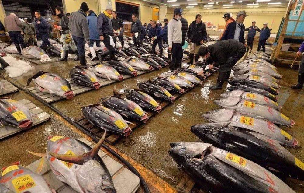天下第一贵的鱼,比大熊猫还濒危,因太好吃人类不愿禁捕_图1-3