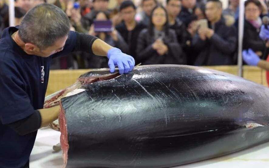 天下第一贵的鱼,比大熊猫还濒危,因太好吃人类不愿禁捕_图1-4