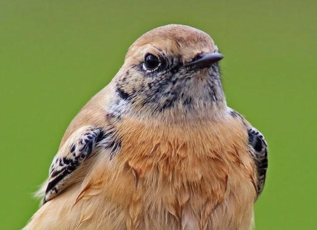海堤上的石棲鳥_圖1-9