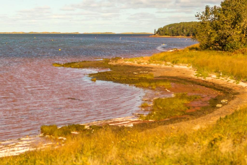加拿大旅途,朦胧的窗外景色_图1-30
