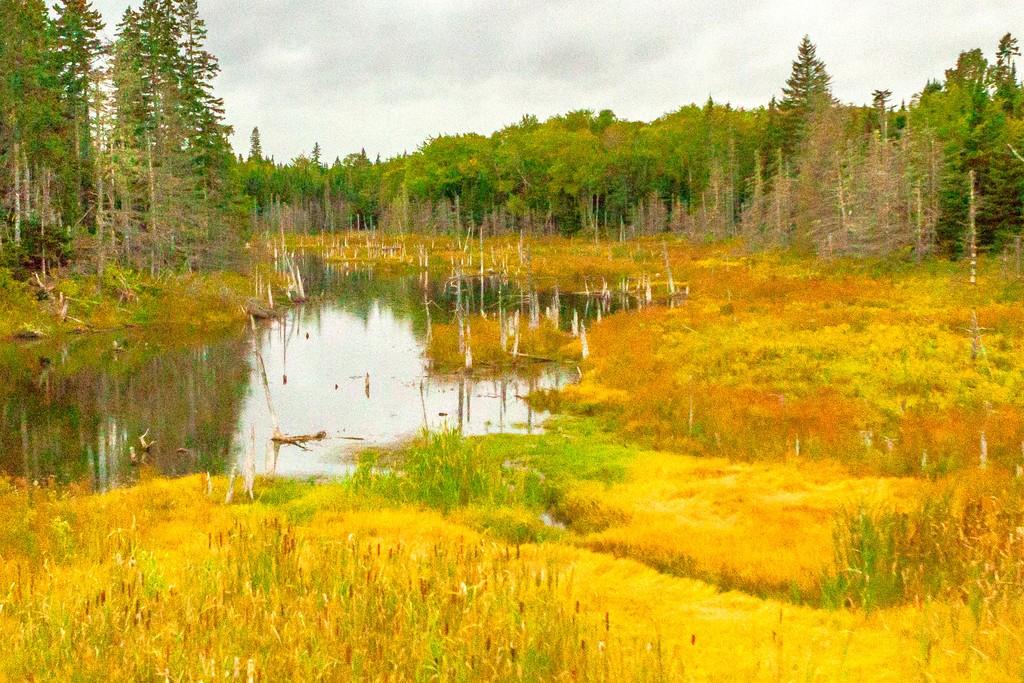 加拿大旅途,朦胧的窗外景色_图1-38