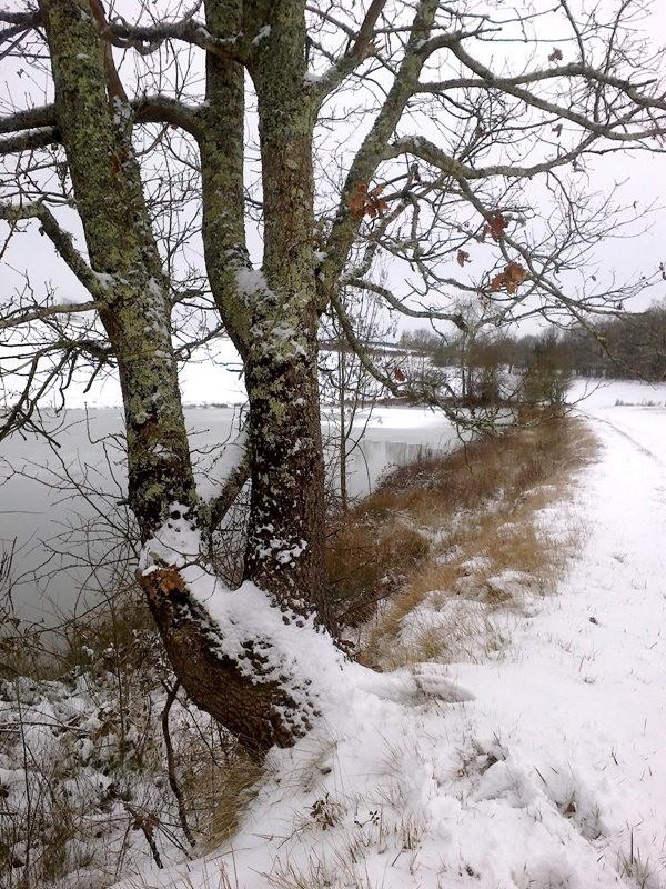 冬湖_图1-11