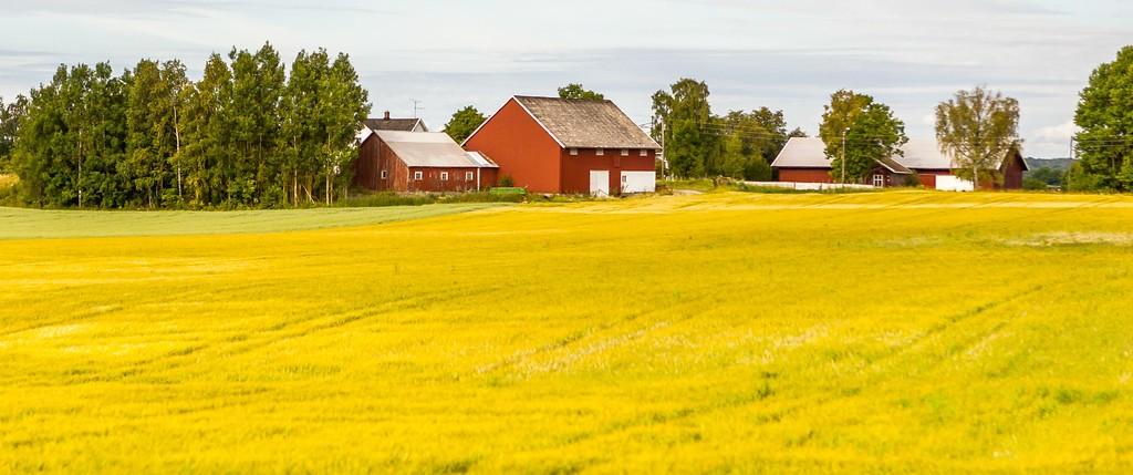北欧旅途,好一派丰收景象_图1-16