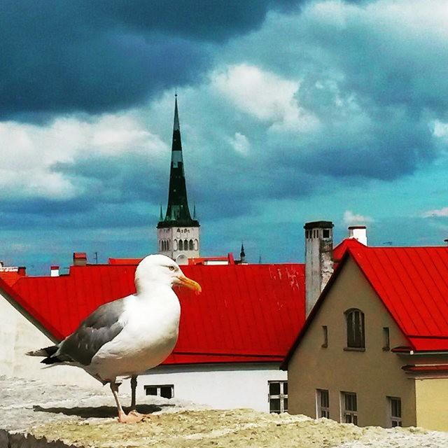 从塔林看爱沙尼亚的首都_图1-9