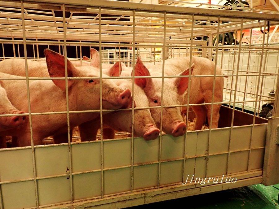 【小虫摄影】2019金猪比赛_图1-19