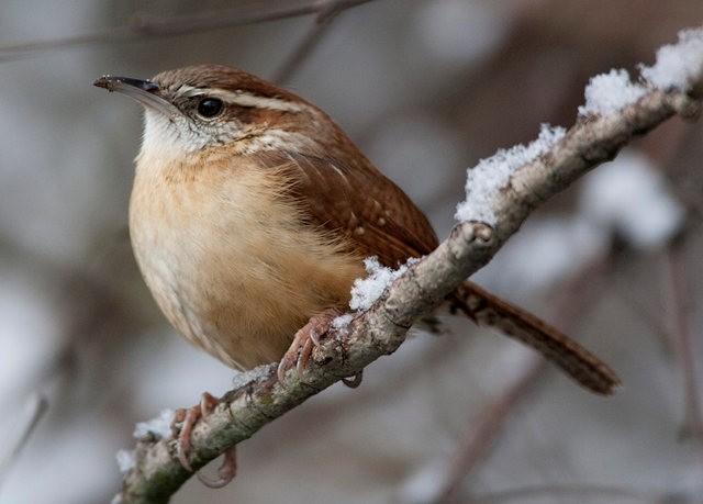 斯特劳德保护区的鸟儿_图1-1