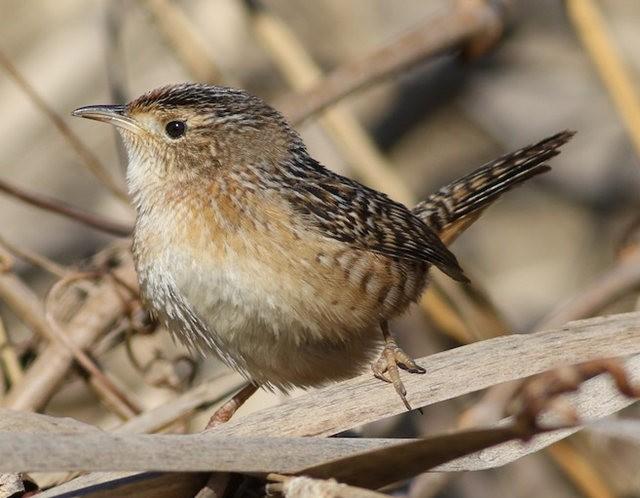 斯特劳德保护区的鸟儿_图1-2