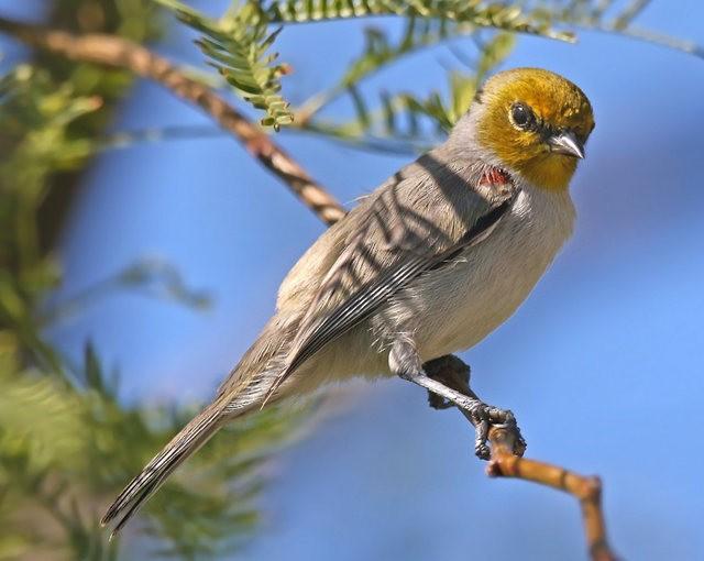 斯特劳德保护区的鸟儿_图1-3