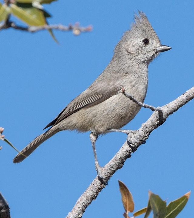 斯特劳德保护区的鸟儿_图1-4