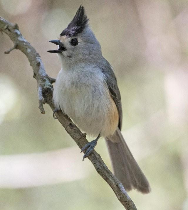 斯特劳德保护区的鸟儿_图1-5