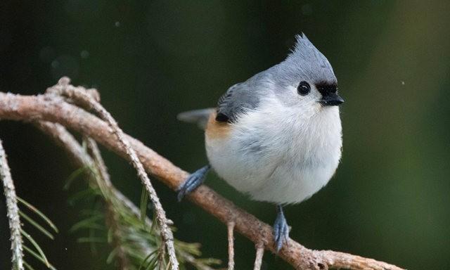 斯特劳德保护区的鸟儿_图1-6