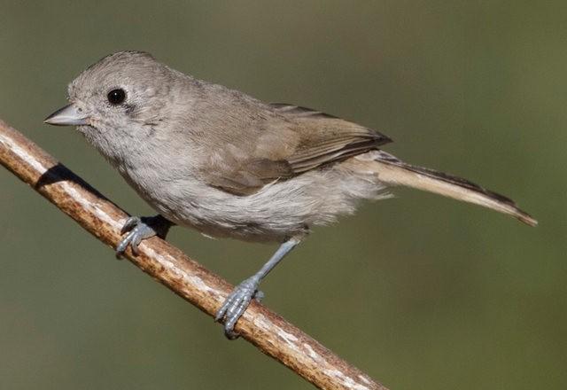 斯特劳德保护区的鸟儿_图1-7