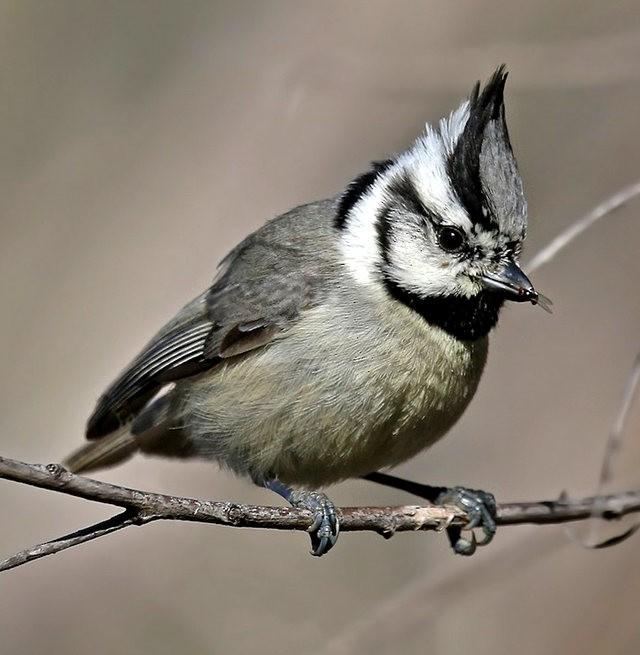 斯特劳德保护区的鸟儿_图1-8