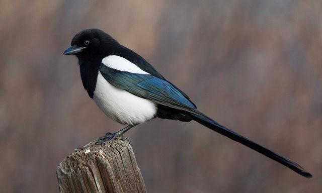 斯特劳德保护区的鸟儿_图1-9