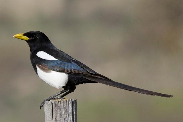 斯特劳德保护区的鸟儿_图1-10