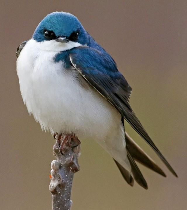 斯特劳德保护区的鸟儿_图1-11