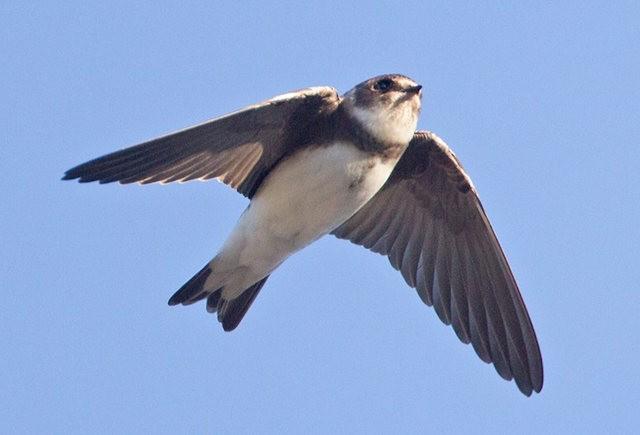 斯特劳德保护区的鸟儿_图1-12