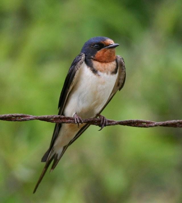 斯特劳德保护区的鸟儿_图1-14