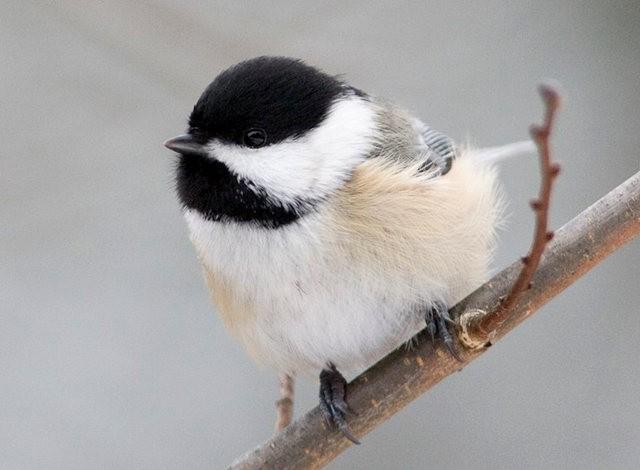 斯特劳德保护区的鸟儿_图1-16
