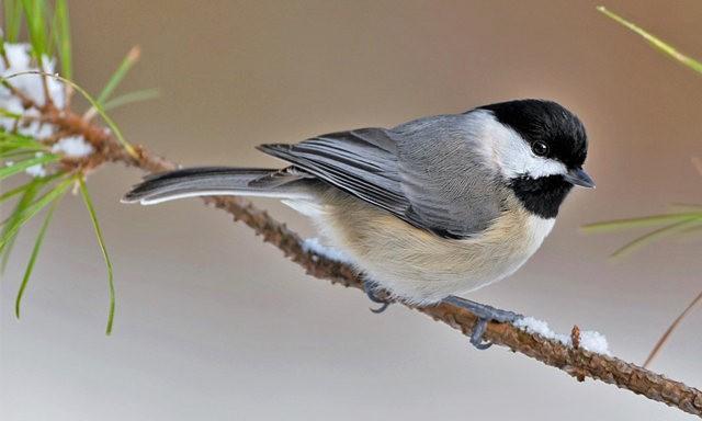 斯特劳德保护区的鸟儿_图1-17