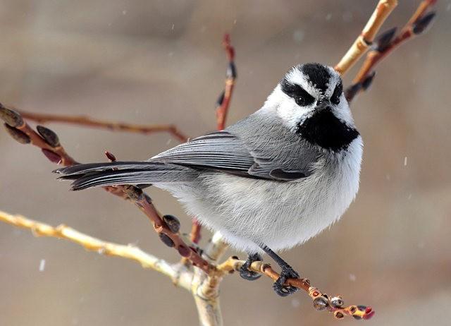斯特劳德保护区的鸟儿_图1-18