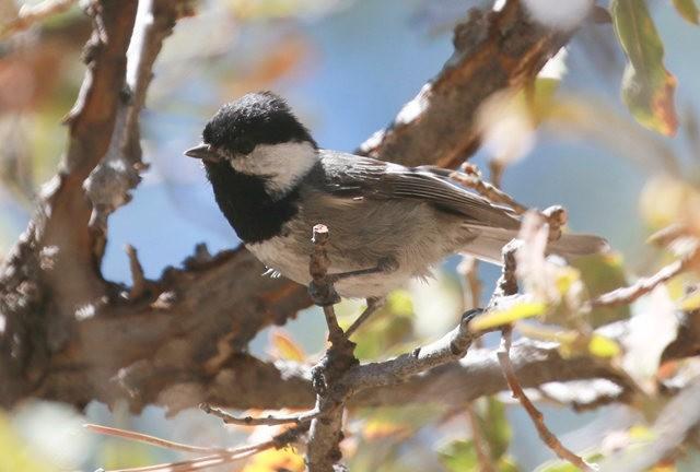 斯特劳德保护区的鸟儿_图1-19