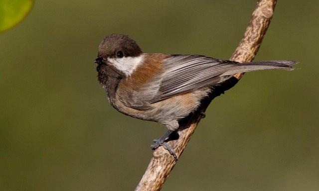 斯特劳德保护区的鸟儿_图1-20