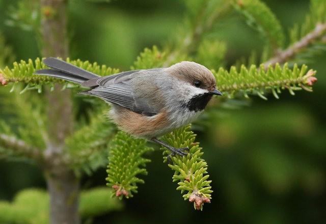 斯特劳德保护区的鸟儿_图1-21