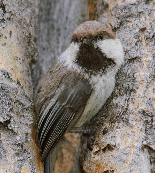 斯特劳德保护区的鸟儿_图1-22