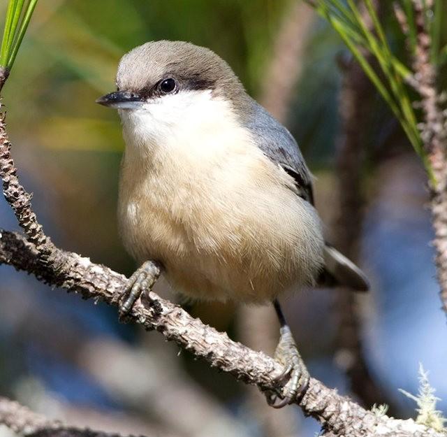 斯特劳德保护区的鸟儿_图1-23