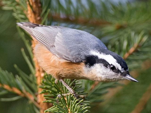 斯特劳德保护区的鸟儿_图1-24