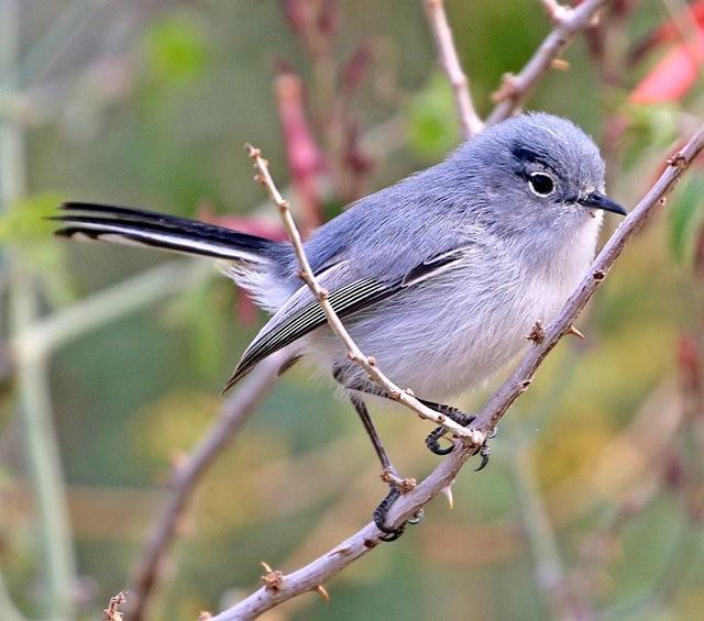 斯特劳德保护区的鸟儿_图1-27
