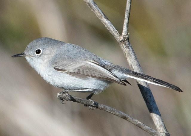斯特劳德保护区的鸟儿_图1-28