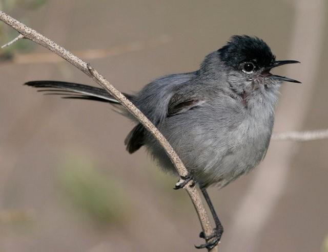 斯特劳德保护区的鸟儿_图1-29