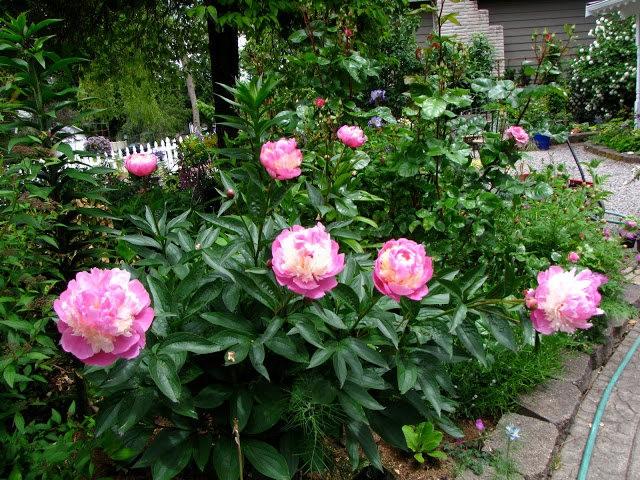思春之---小苑花园_图1-15