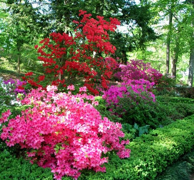 思春之---小苑花园_图1-24
