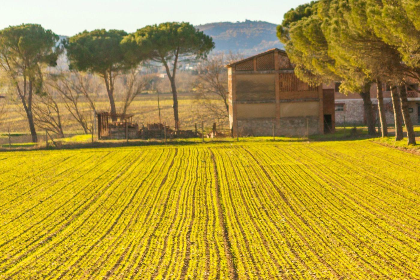 意大利路途,秋后的农村_图1-12
