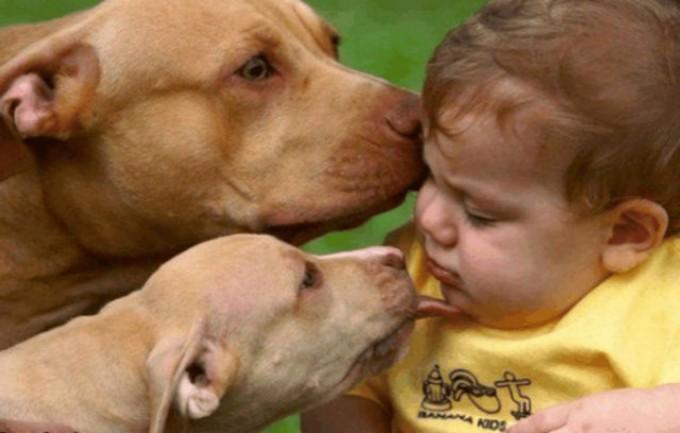 最近一9岁男孩被狗舔手后死亡!狂犬病预防知识 你要了解更多游走死神来临怎么办 ..._图1-5