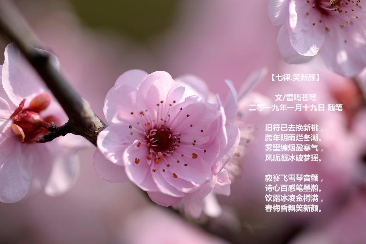 【七律.笑新颜】_图1-1