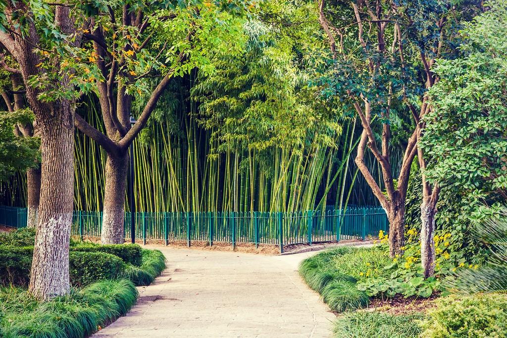 上海高桥公园,忙里偷闲逛一圈_图1-9