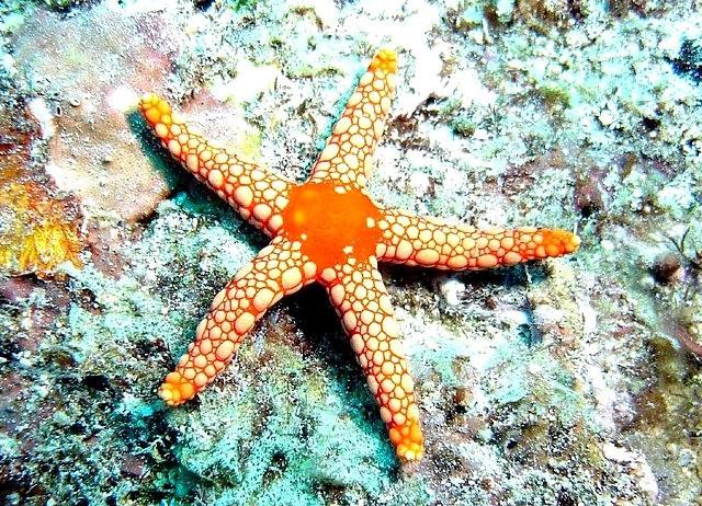 马尼岛海之星_图1-8