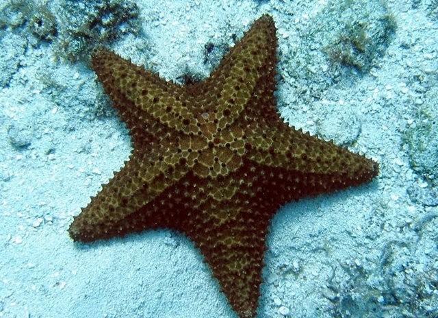 马尼岛海之星_图1-11