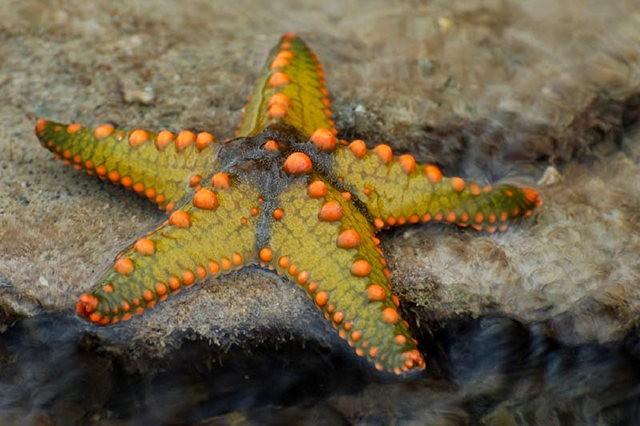 马尼岛海之星_图1-12