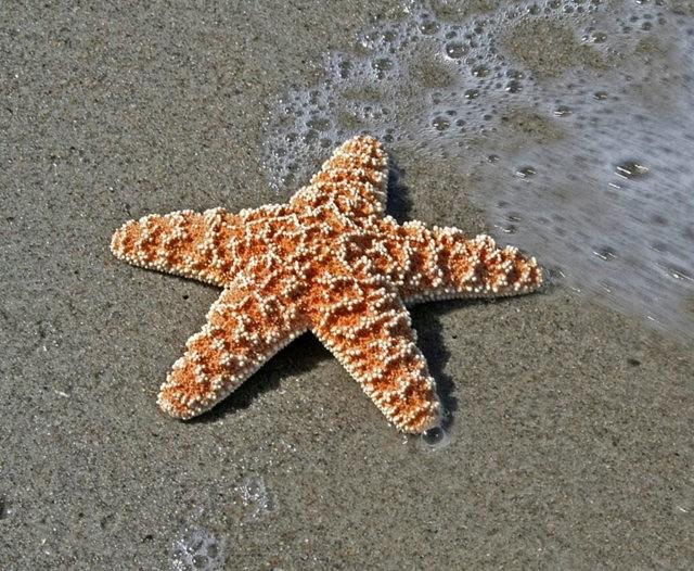 马尼岛海之星_图1-13